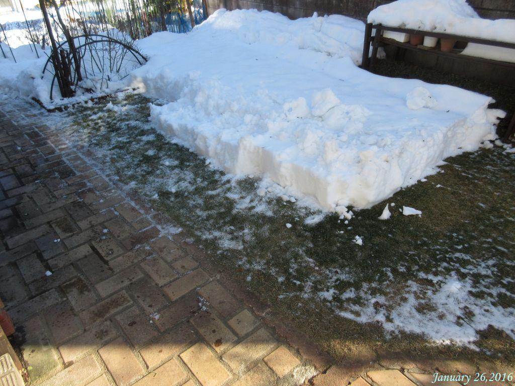 画像1(庭の雪)