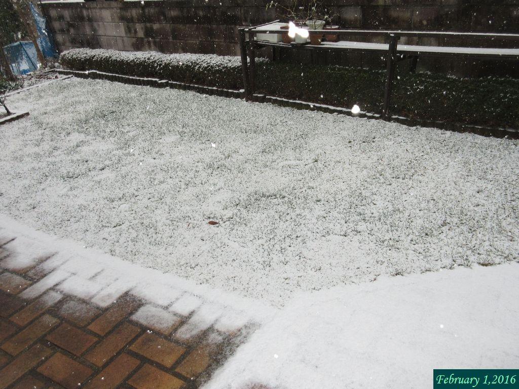 画像1(再び雪)