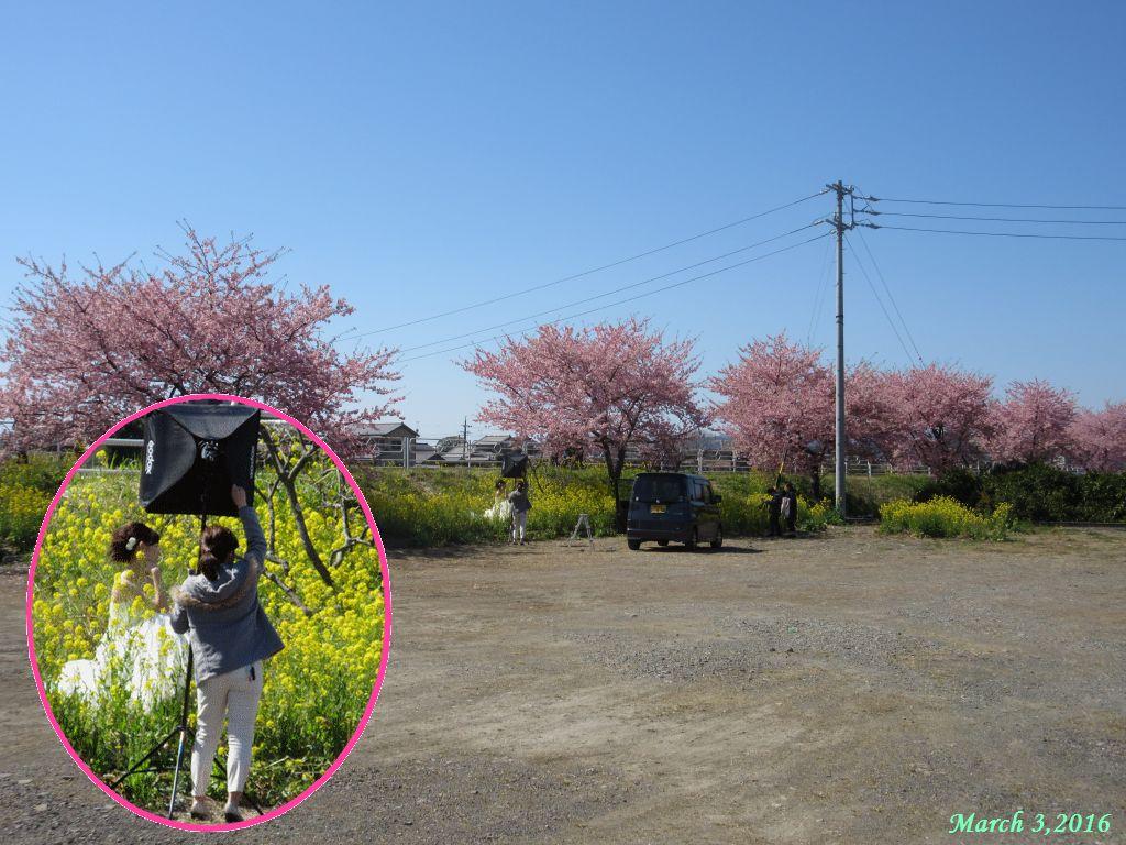 画像17(朝比奈川堤 写真撮影)
