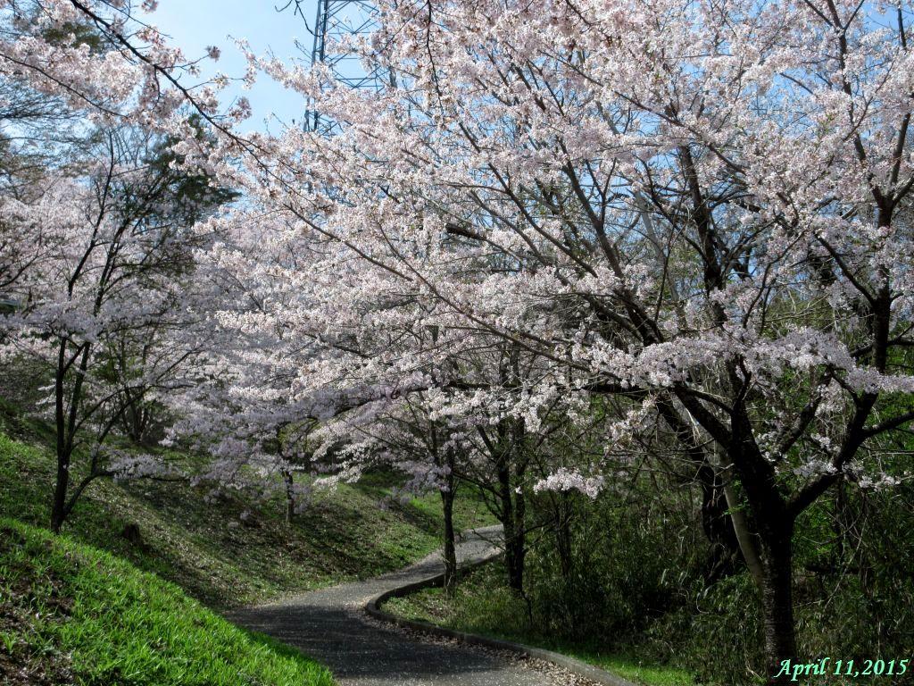 画像7(上り道)