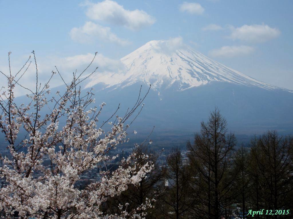 画像4(忠霊塔から見た富士山)