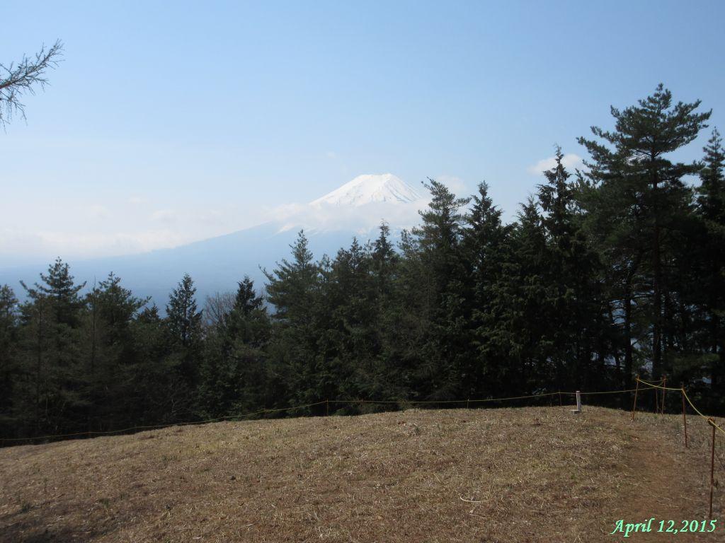 画像7(アヤメの群生地から見た富士山)