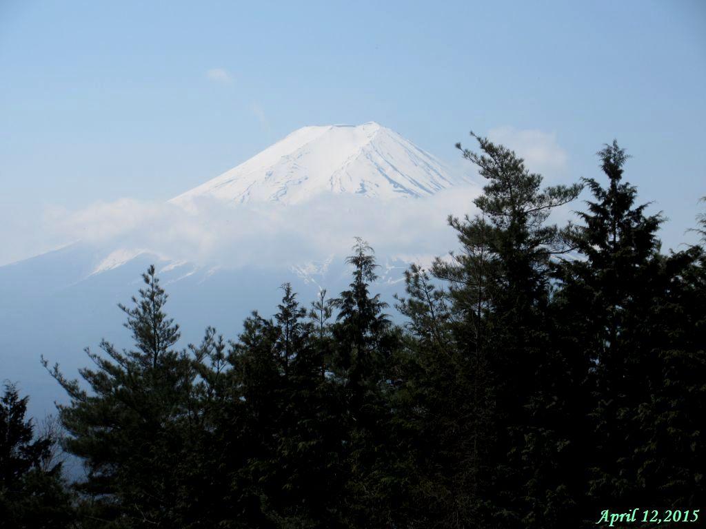 画像8(アヤメの群生地から見た富士山)