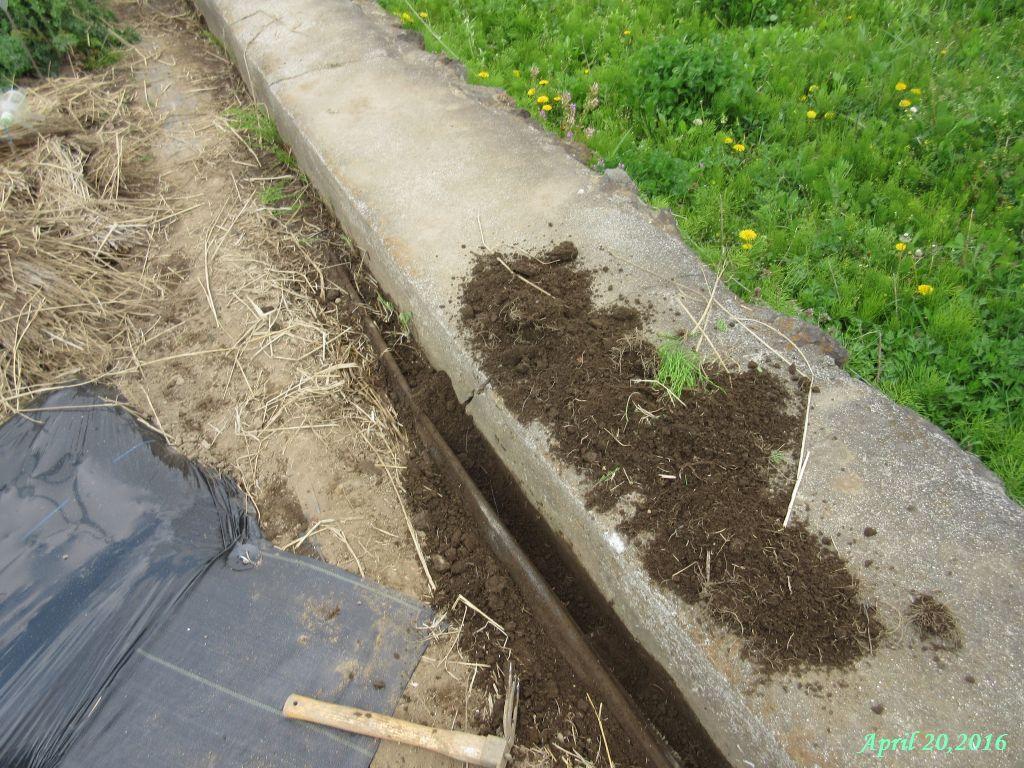 画像6(防草シートの隙間の溝掘り)