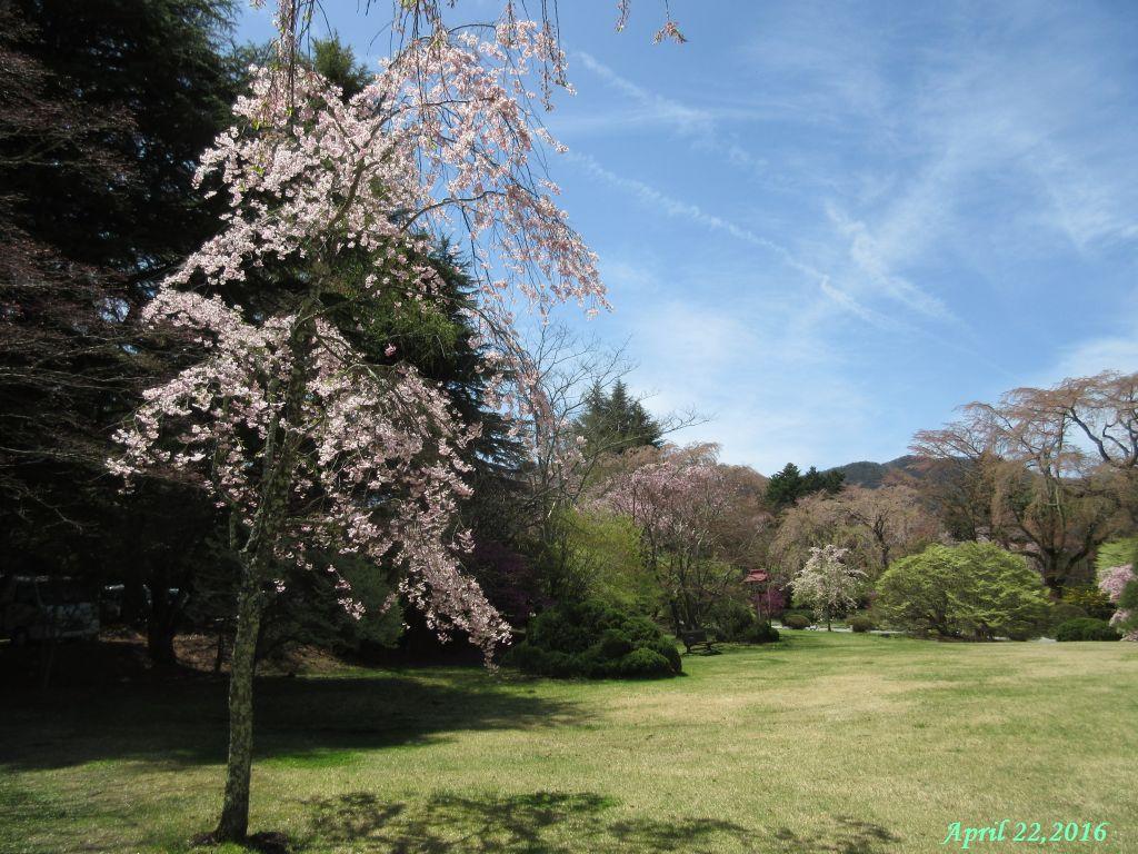 画像2(富士ビューホテルの庭)