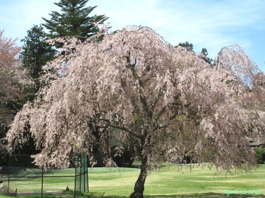 画像3(富士ビューホテルの庭)
