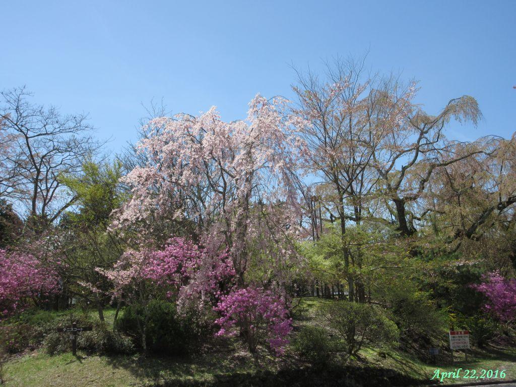 画像6(富士ビューホテルの庭)
