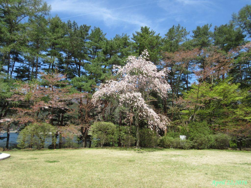 画像7(富士ビューホテルの庭)