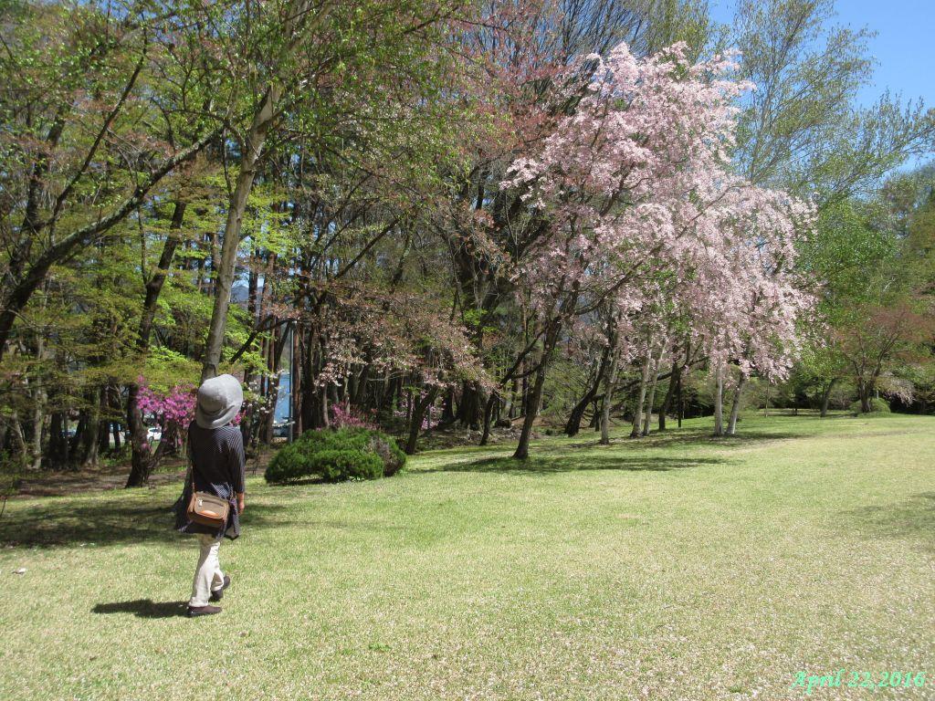 画像8(富士ビューホテルの庭)