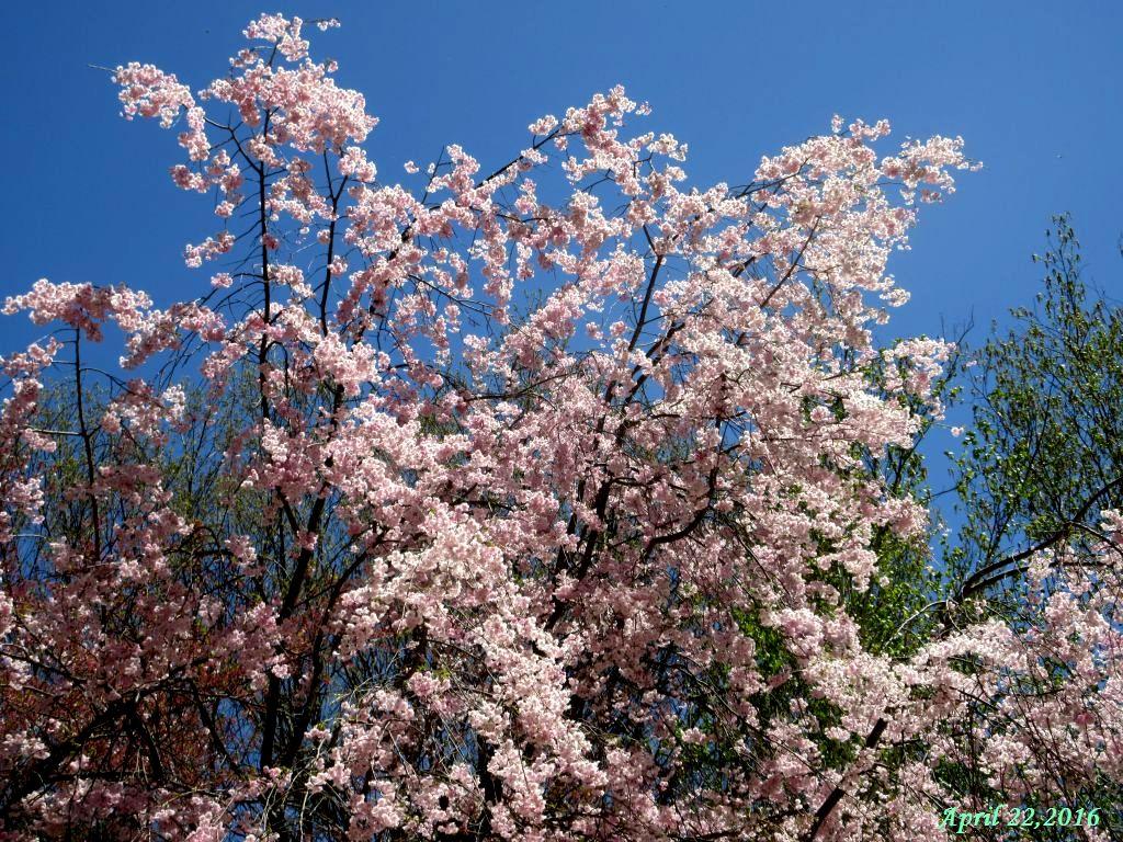 画像9(富士ビューホテルの庭)