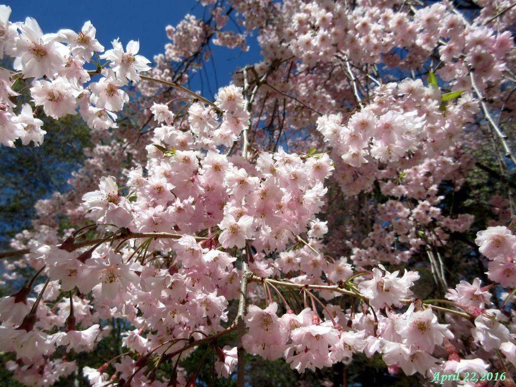 画像10(富士ビューホテルの庭)