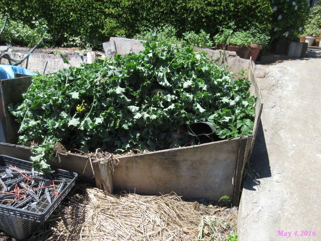 画像5(片づけた冬菜の山)