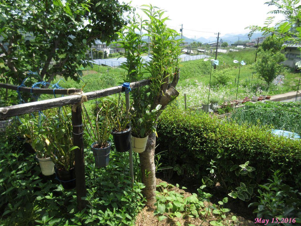 画像6(ハナモモの木)