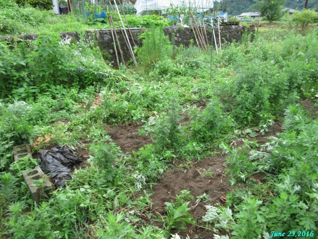 画像1(隣の畑)