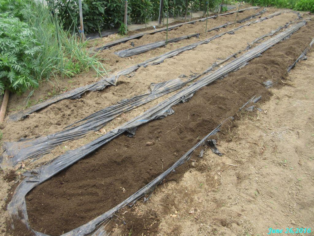 画像13(ジャガイモ収穫後の畑)