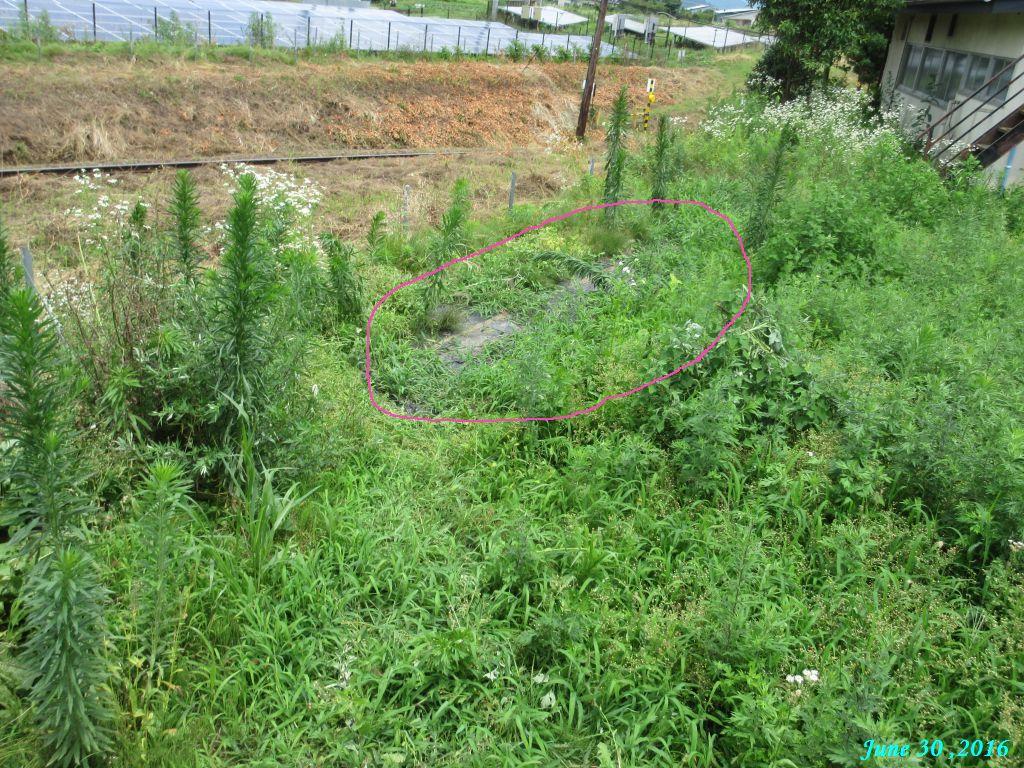 画像9(隣の畑)