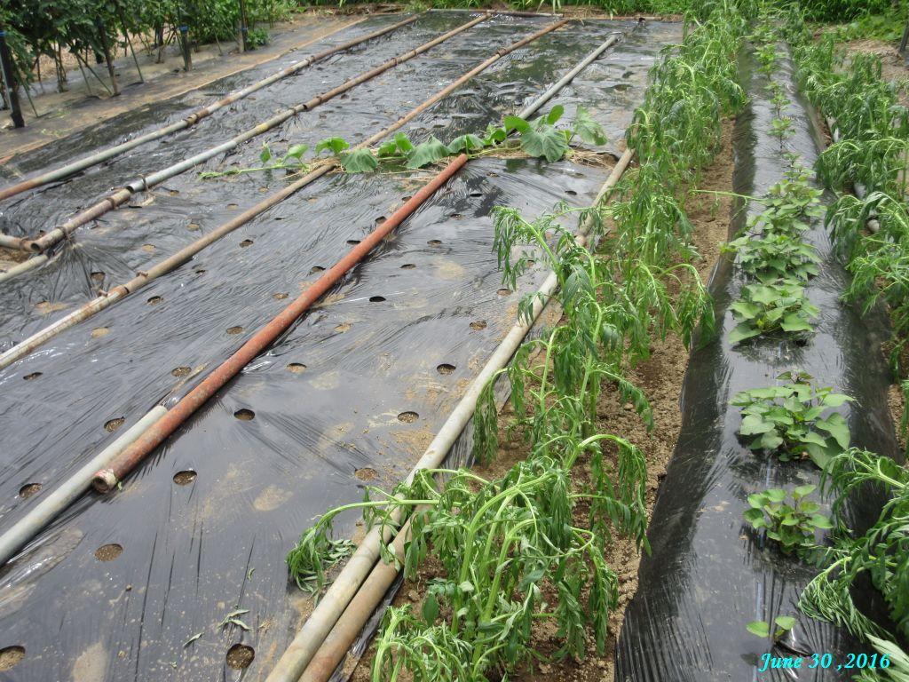 画像10(隣の畑から持ってきた単管)