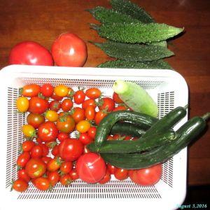 画像9(本日の収穫)