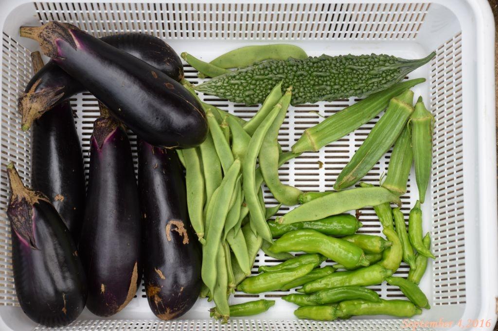 画像15(収穫した野菜)