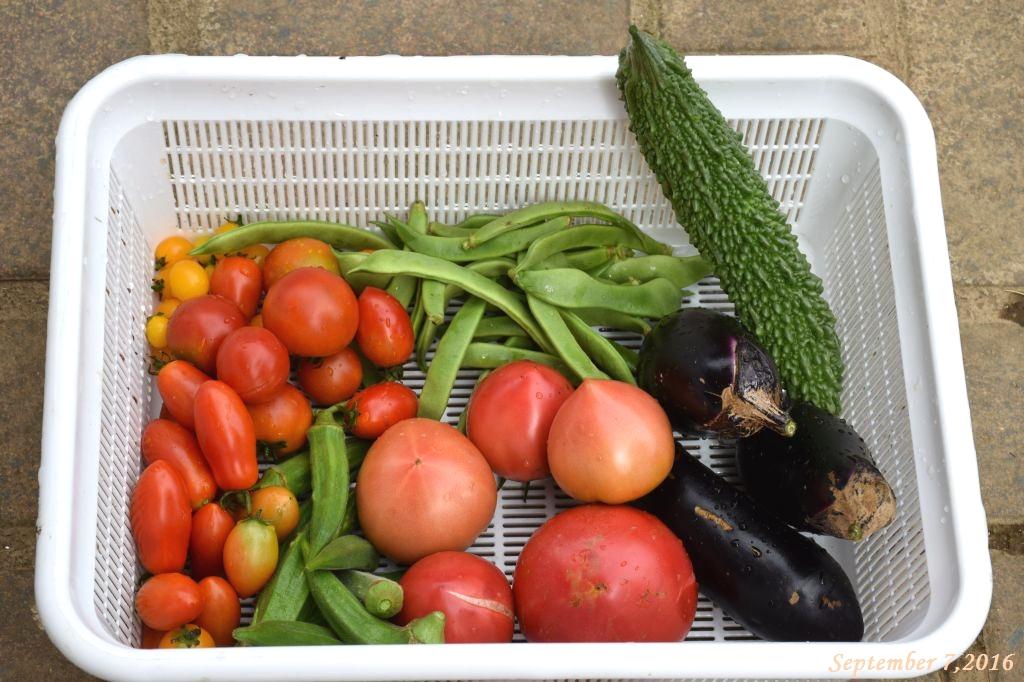 画像18(収穫した野菜)