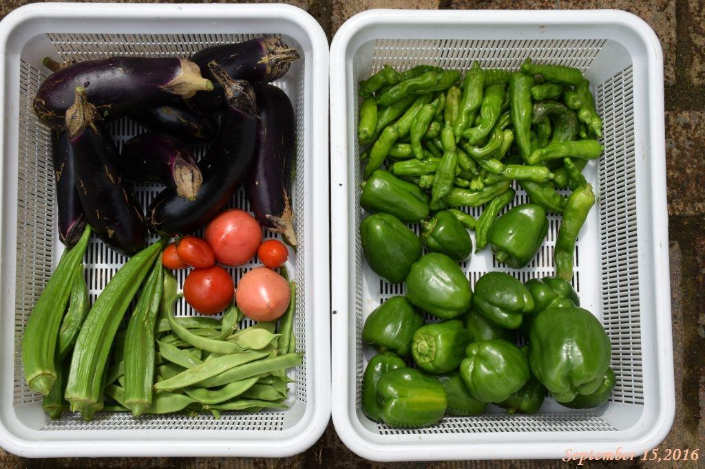 画像14(収穫した野菜)