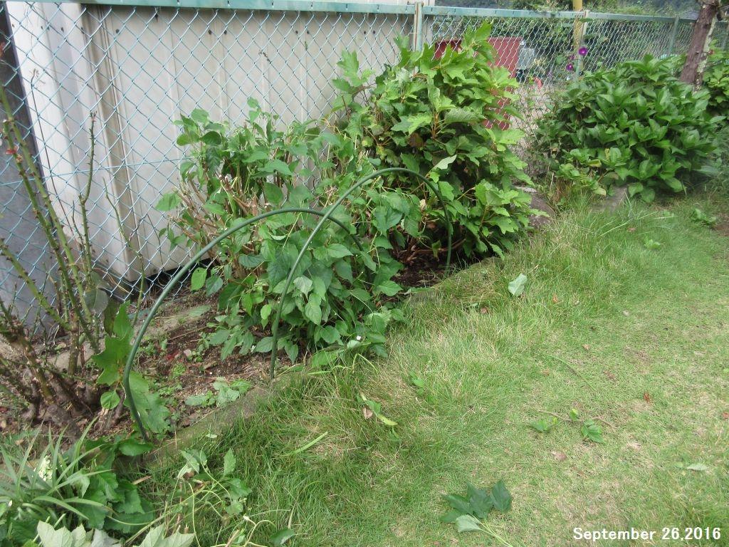 画像9(西側の庭)