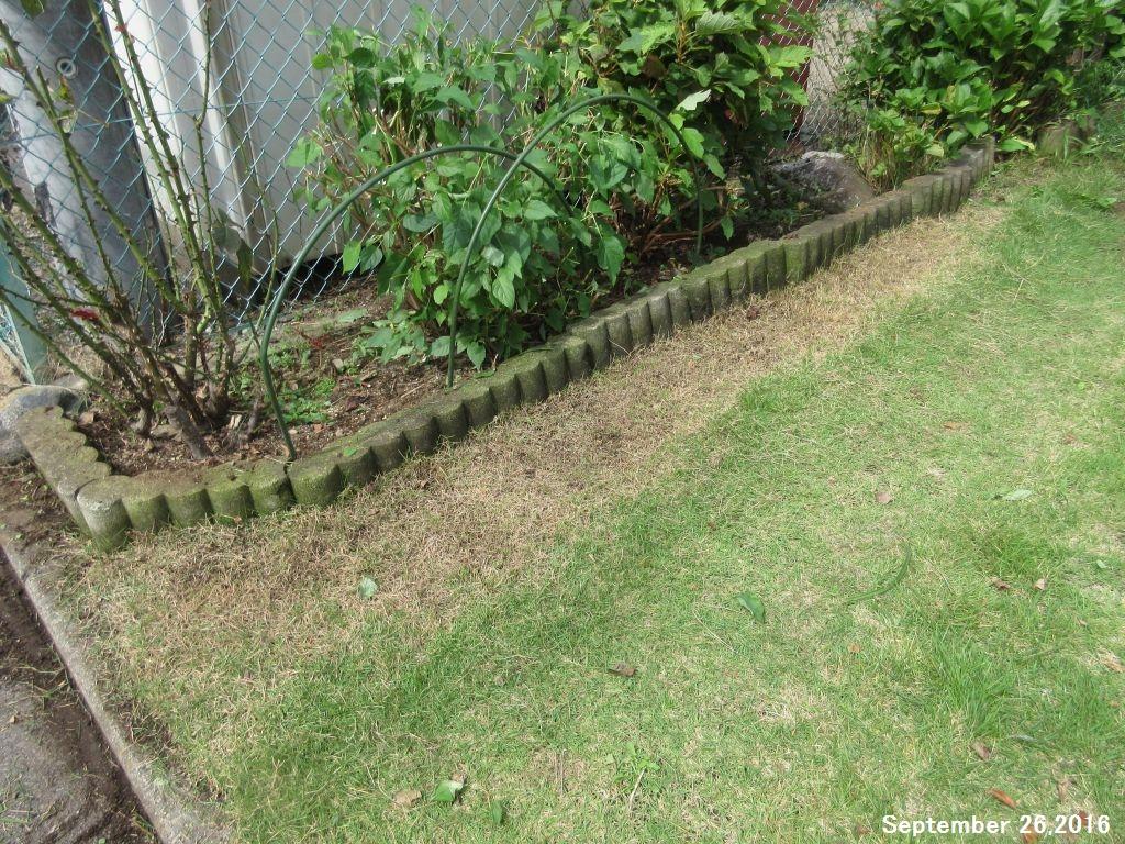 画像10(西側の庭 芝の際刈り)