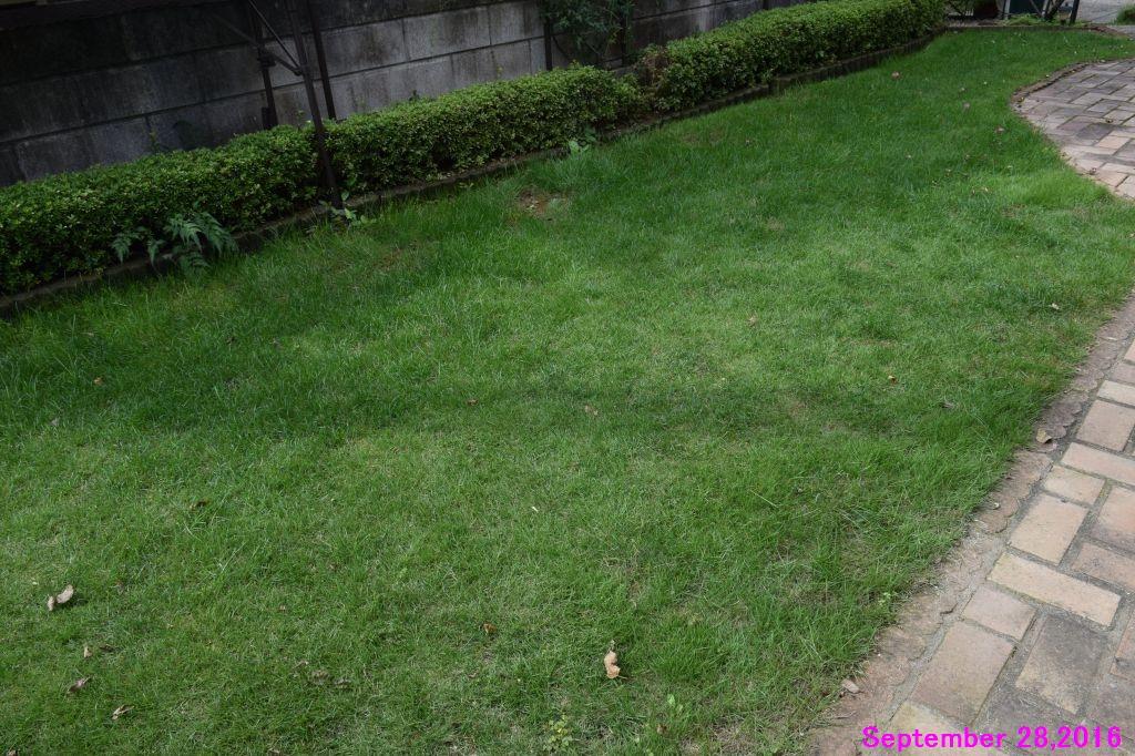画像1(手入れ前の芝生)