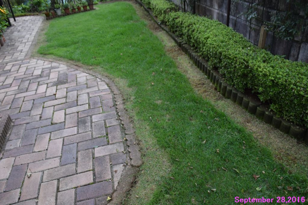 画像3(芝の草取りと際刈り)