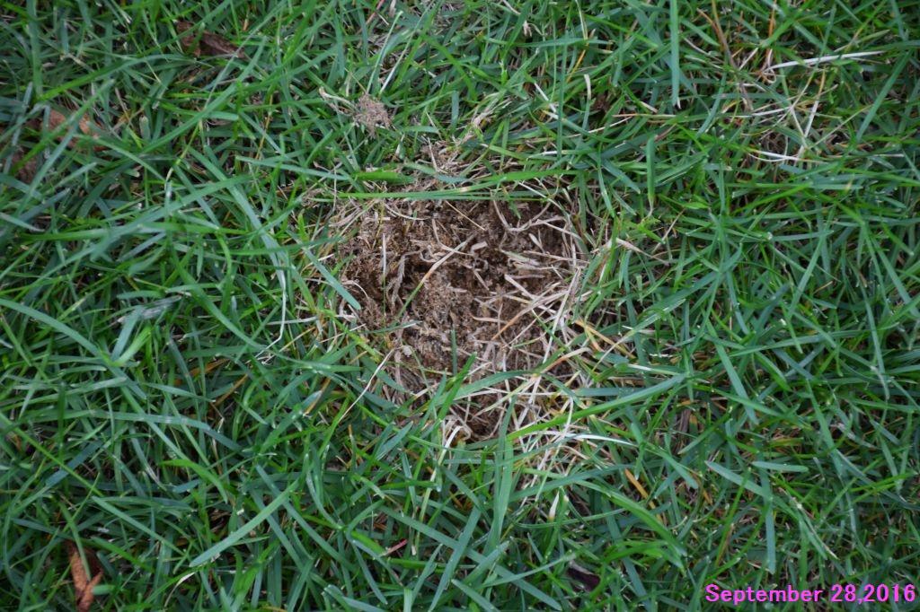 画像5(枯れた芝を取り除く)