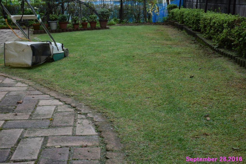 画像6(芝刈り後)
