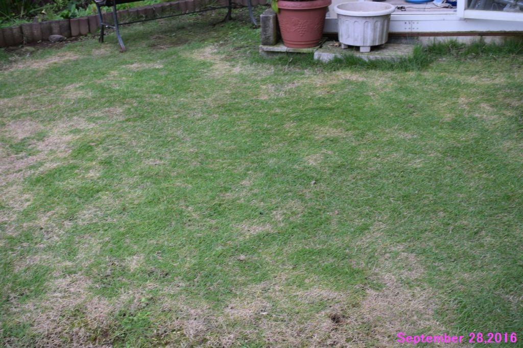 画像7(西側の芝生)