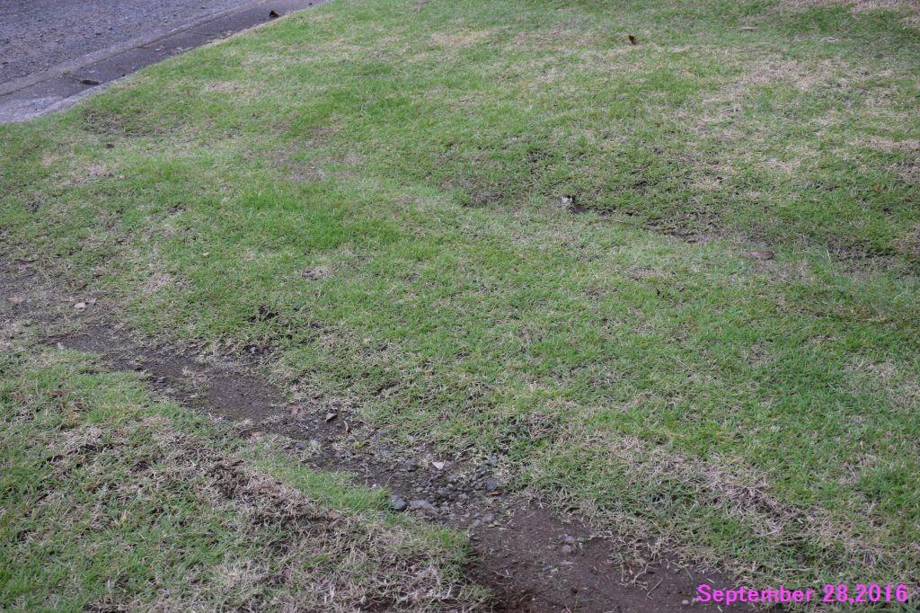 画像8(西側の芝生)