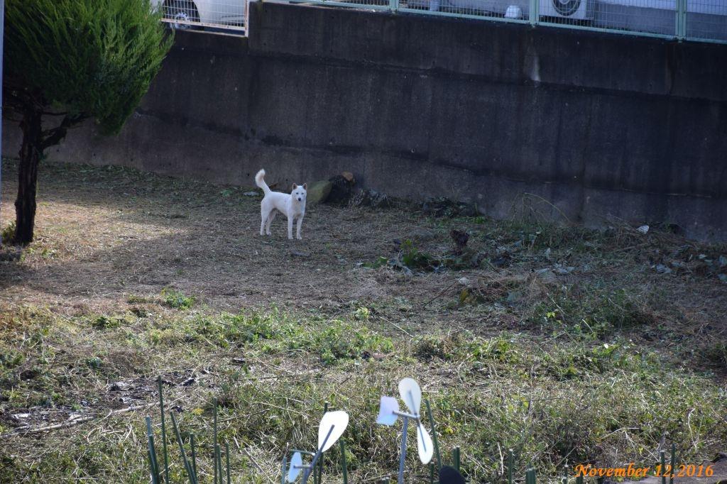 画像3(雉と野良犬)