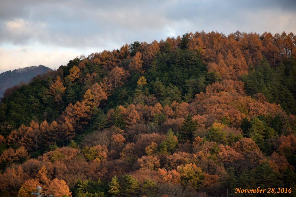 画像3(近くの山)