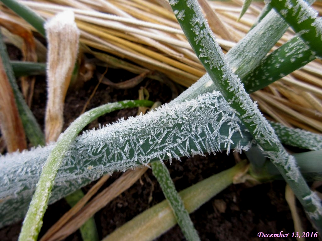 画像4(霜)