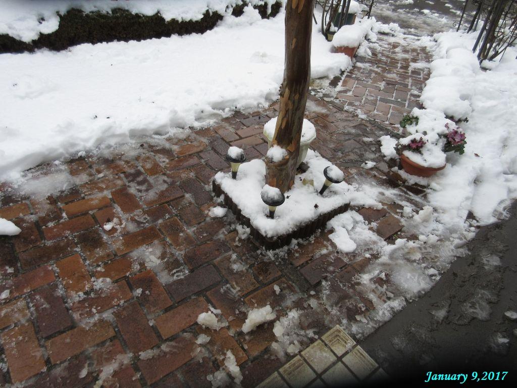 画像7(庭の雪かき)