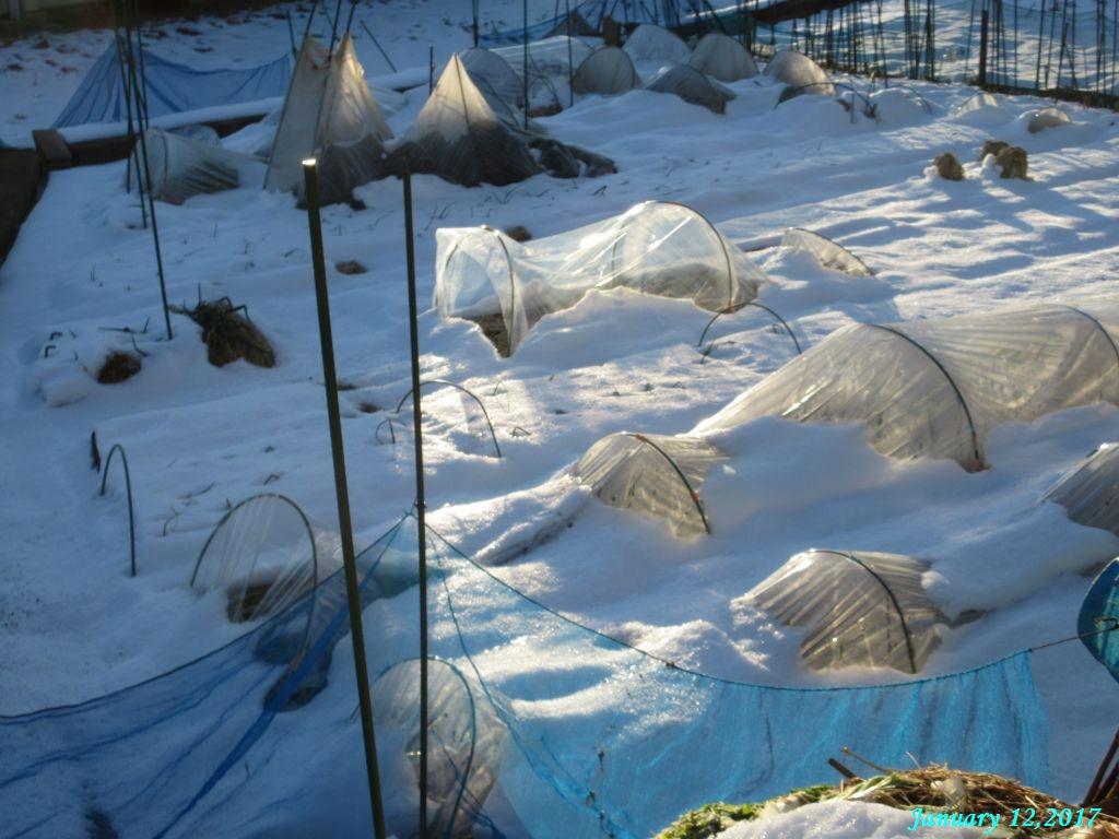画像3(雪が残る畑)