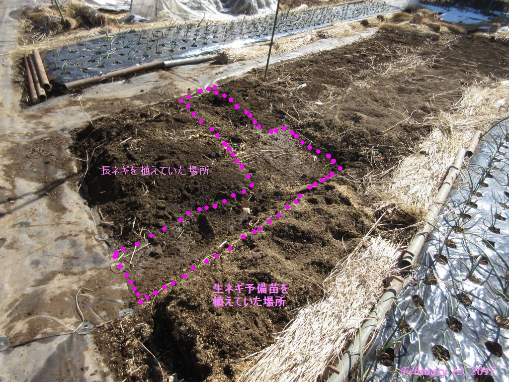 画像4(移植後の畑)