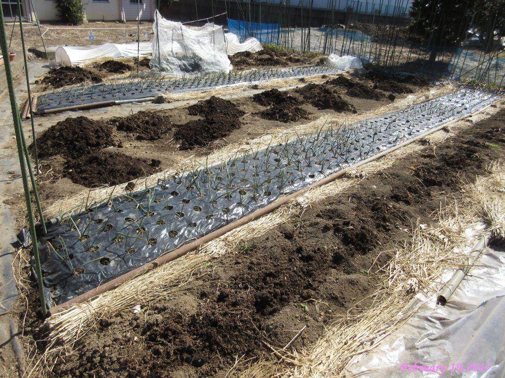 画像9(堆肥を入れた畑)