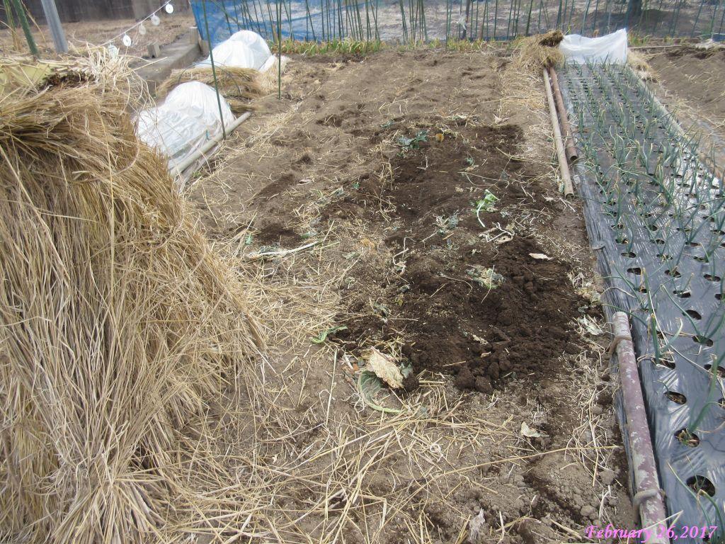 画像5(ブロッコリーの撤収後の畑)
