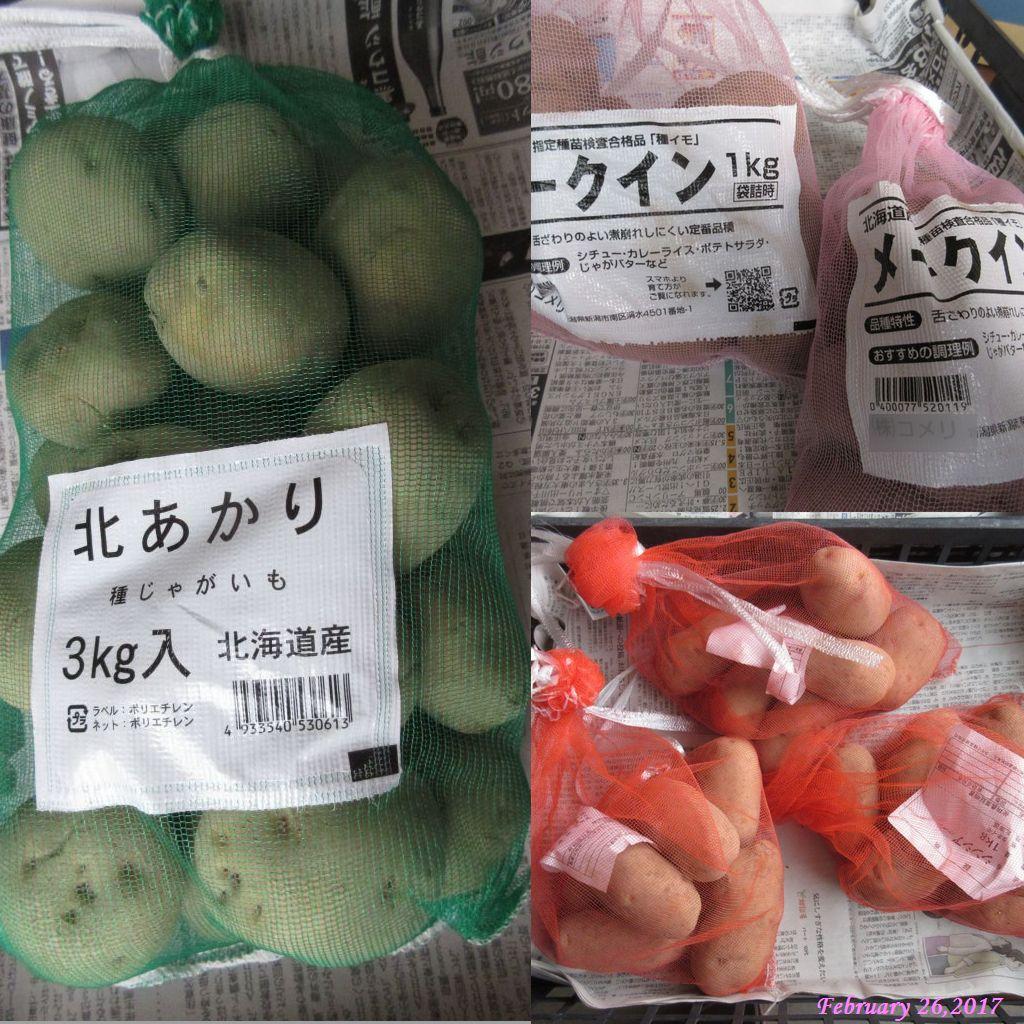 画像11(ジャガイモの種芋)