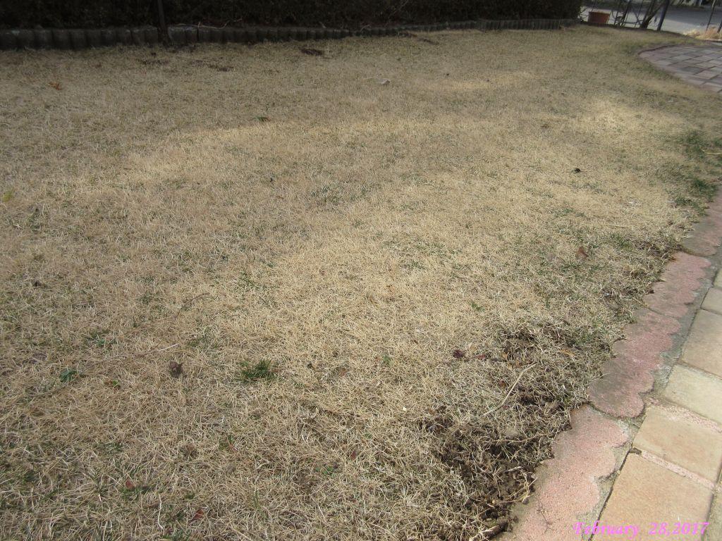 画像2(芝生の雑草)