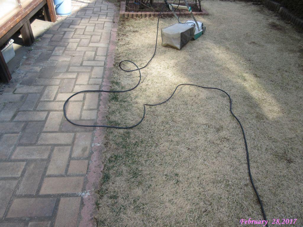 画像5(枯れた芝生の刈り取り)