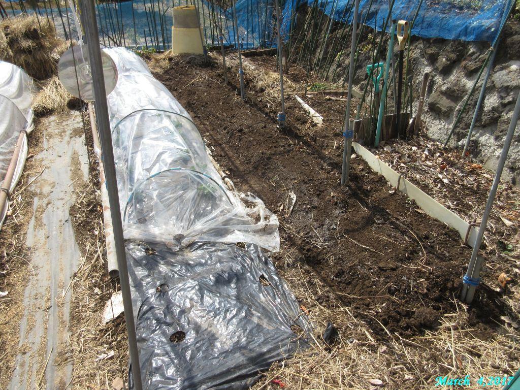 画像5(棚下の畝、鍬で耕す)
