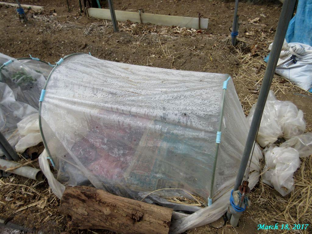 画像5(長ネギの苗床)
