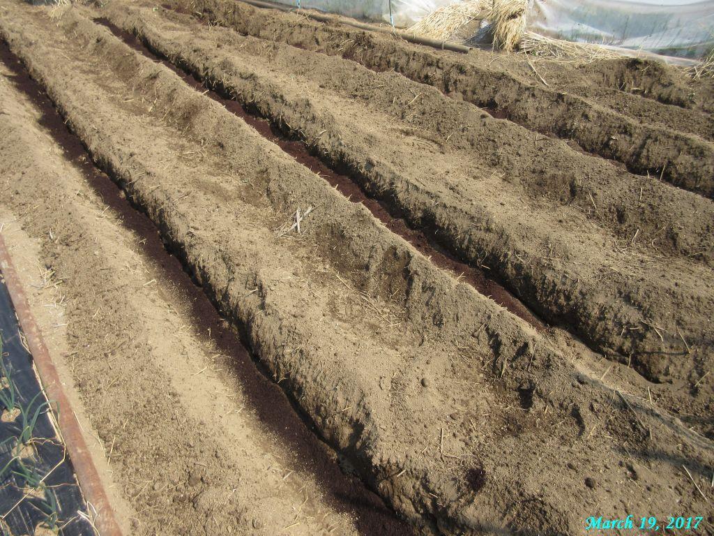 画像3(ジャガイモの溝施肥)