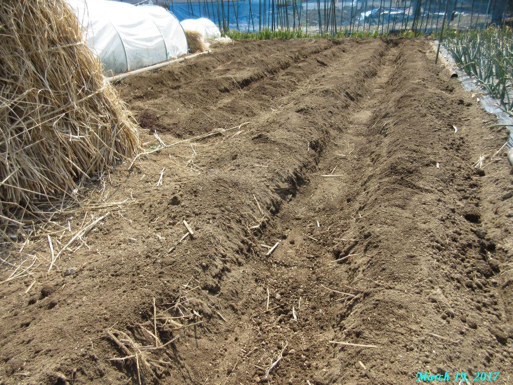 画像5(ジャガイモの溝施肥土をかける)