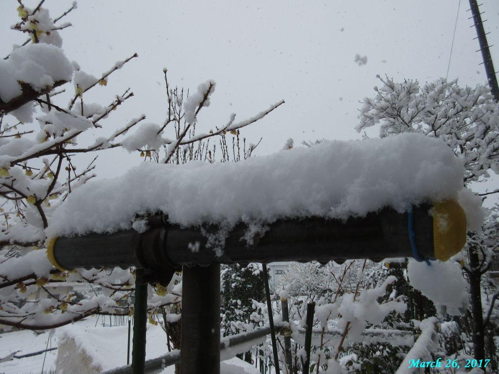 画像3(単管パイプの雪)