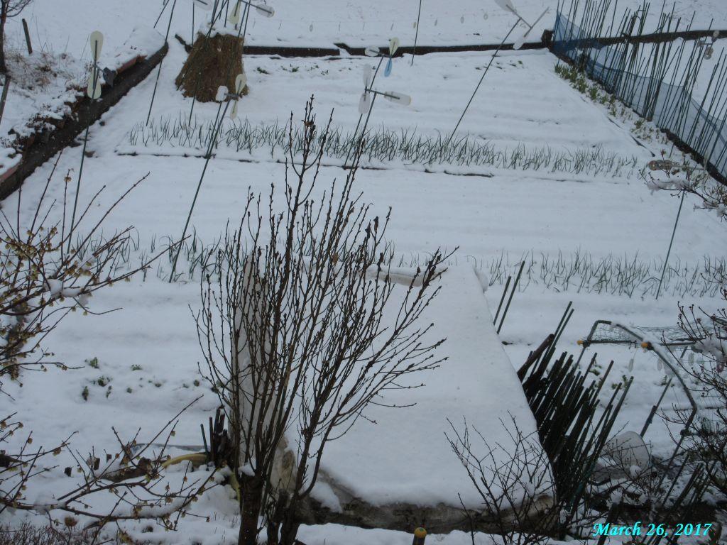 画像4(畑の雪)